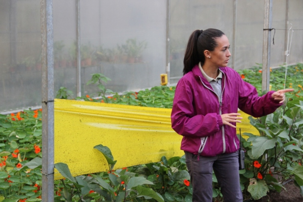 Ingrid, a staff member at Villa Blanca ecolodge, explains how they manage pests without pesticides in their greenhouse. The lodge supplies all its food from here and from local farms and recycles grey water and food waste on-site.